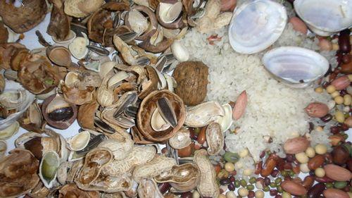 快乐粘贴画(苏州园); 的瓜子壳