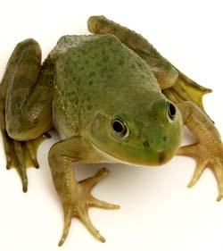 青蛙、蛇要冬眠度过冬天哟. 原来动物过冬还有这么多学问,好其妙的