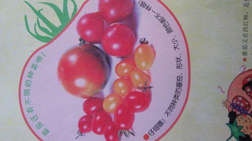 我们还了解了番茄的形状特征和颜色-番茄红了