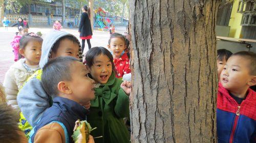 一片片的叶子从树上落下来,小朋友们也有了新的发现!