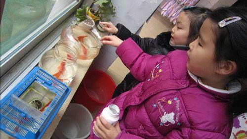 平时多指导幼儿观察饲养小动物,这样不仅能加深幼儿对动物生活习性和