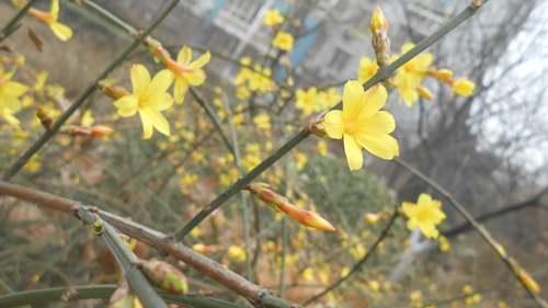 一年之计在于春,春天是播种的季节,让