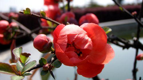 """小朋友一起观察了梅花,说:""""红色的好漂亮."""