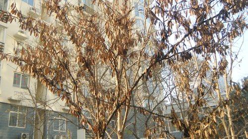树叶冬天为什么会掉落
