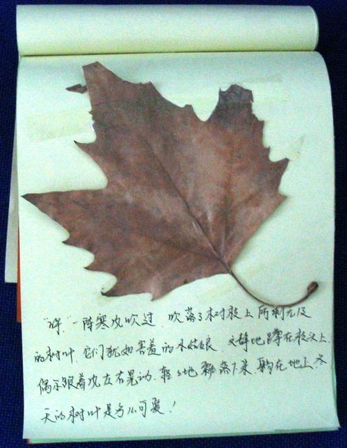 小朋友们用树叶做的拼贴画感谢秋天!目的是让孩子们认识秋天