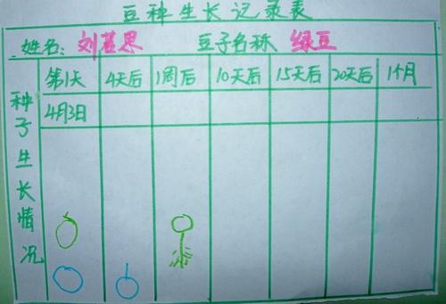 小学生种植豆子步骤图